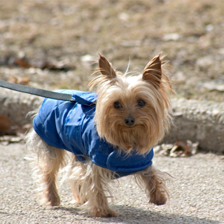 dog walk in coat